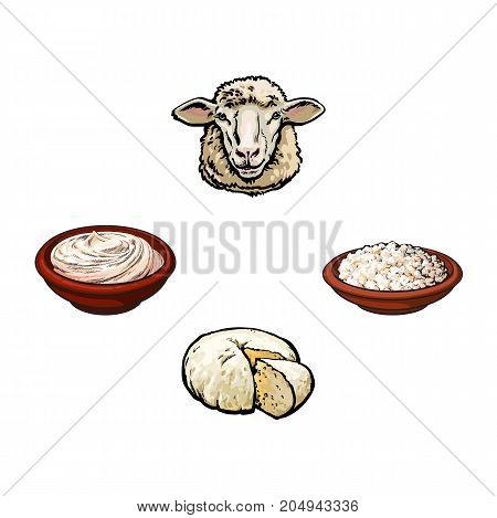vector sketch cartoon style, sheep head cottage cheese plate, sour cream set. Isolated illustration on a white background. Hand drawn femrented milk product design objects