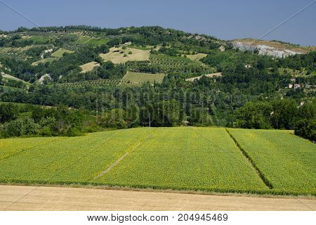 Rural landscape at summer along the road from Brisighella to Modigliana (Ravenna Emilia Romagna Italy)