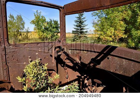 Weeds growing inside the cab of a deteriorated rusty car from the late 1920's.