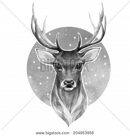 Noble deer. Black and white watercolor illustration