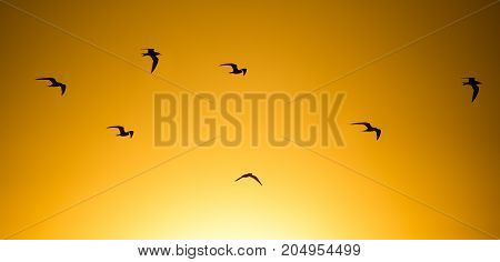 A flock of birds at sunset in nature .