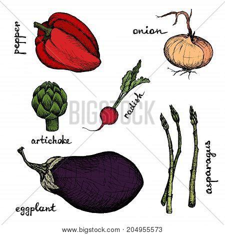 Vegan Menu - Eggplant Radish Artichoke Onion Pepper Asparagus - color hand-drawn objects