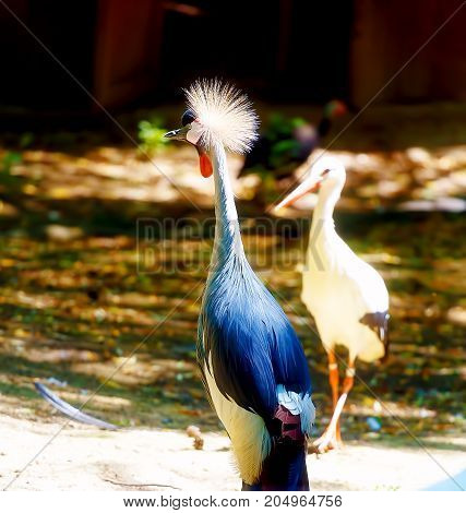 Beautful bird. Blur nature background. Color bird