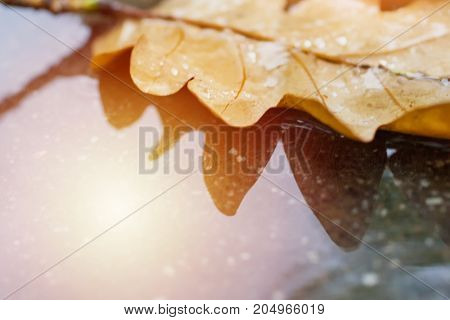 Colorful autumn background with yellow dry oak leaf. Wet asphalt with leaf macro