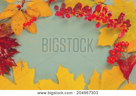 Fall yellow maple leaves and red berries frame on blue background, retro toned