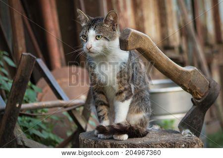 Cat On A Log