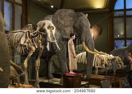VIENNA, AUSTRIA - 23 AUGUST 2017: Exhibits and expositions in the Museum of Natural History, Vienna.