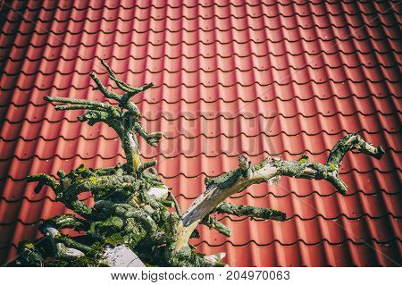 a dead tree stands in front of a red tile roof