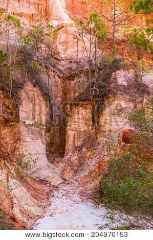 Red loamy wall of Providence Canyon with trees growing on it USA