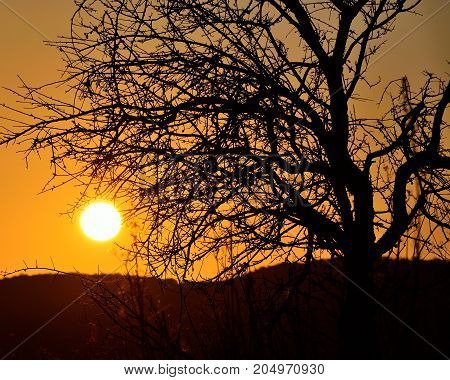 Tree backlit in foreground and splendid sun at dawn