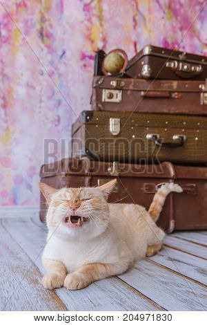 Thai white with red marks cat with blue eyes sits near vintage suitcases on a pink background toned picture close-up shallow depth of field