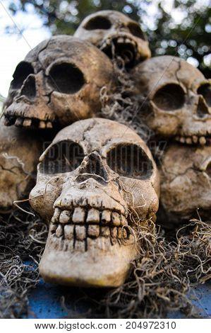 Four skull Halloween decorations sitting outside on Halloween