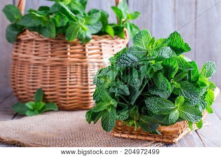 Mint in a basket on a old wooden background. Selective focus. Copy space