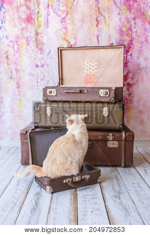 Cat Sits Near Vintage Suitcases