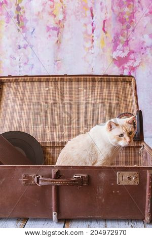 Cat With Blue Eyes Sits Inside Big Vintage Suitcase