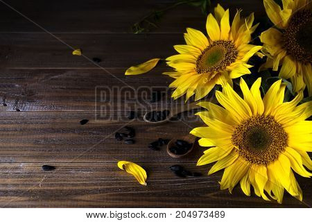 yellow sunflowers with seeds on background of old fence.