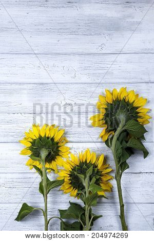 Autumn background with sunflowers on wooden board, copy space