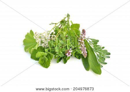 Fresh green herbs bouquet on white background