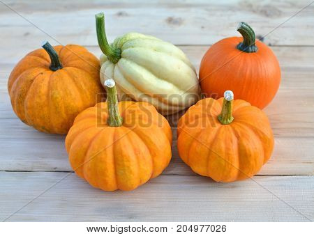 Group Of Pumpkins And Squashes