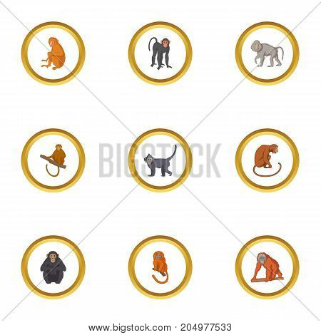 Wild monkey icons set. Cartoon style set of 9 wild monkey vector icons for web design