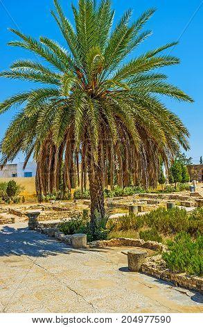 Enjoy Roman Mosaics In El Djem