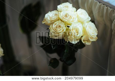 beautiful bouquet of cream roses on the white background