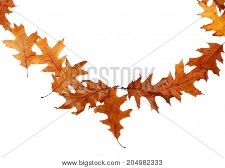 Frame Of Autumn Dried Oak Leaves With Copy Space
