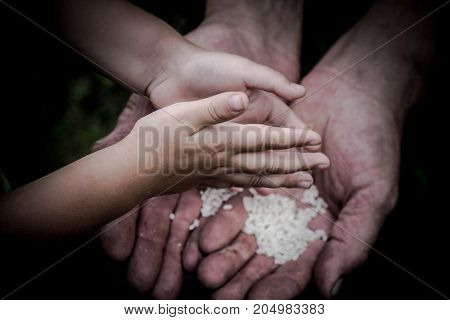 Two palms men stacked together. The palms is a lot of rice grains. Children's hands over the palms