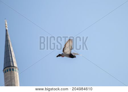 Pigeon Flying In Air