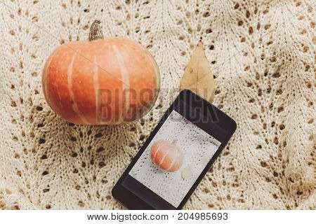 Instagram Blogging Concept. Phone With Photo Of Pumpkin And Leaf On Warm Sweater, Top View. Hallowee