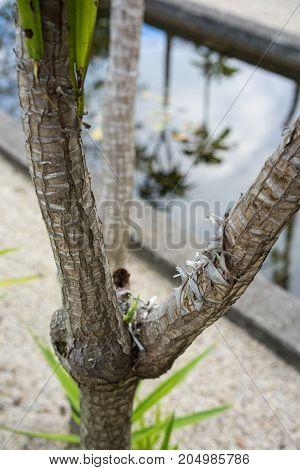 yucca elephantipes leaf plant close up from guatemala