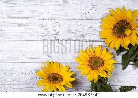 Frame sunflowers on wooden board, copy space flat lay