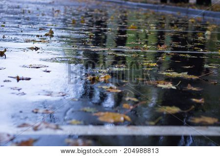 Yellow Leaves Floating On Wet Asphalt In Autumnal Rain Forest