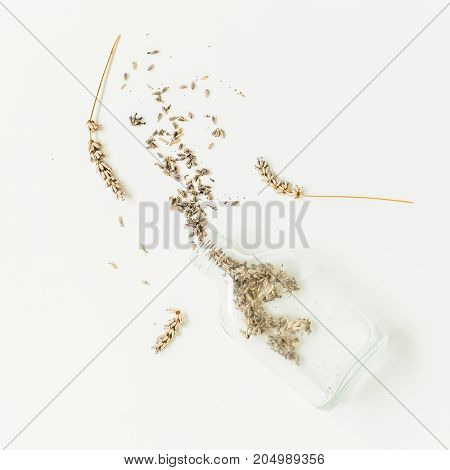 Dry lavender isolated on white background. still life.