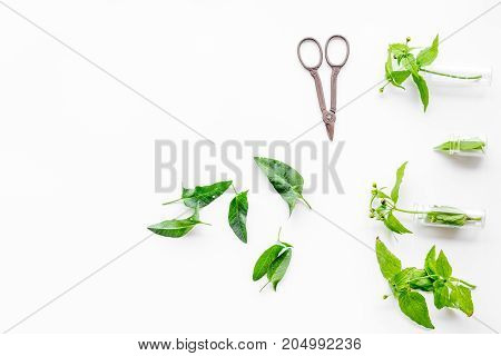 Harvest medicinal herb. Leaves and sciccors on white background top view.