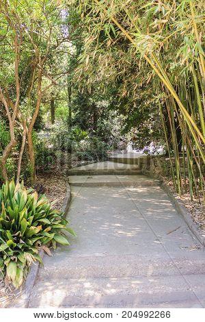 Path among plants. Lush vegetation of the Nikitsky Botanical Garden in the Crimea.