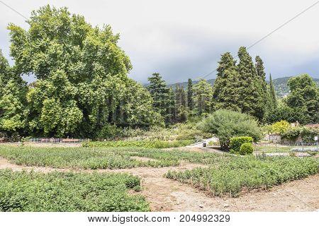 Pathways between plants. Lush vegetation of the Nikitsky Botanical Garden in the Crimea.