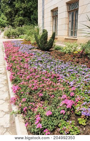 A flower bed of small flowers. Lush vegetation of the Nikitsky Botanical Garden in the Crimea.
