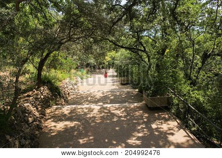 A long descent into the park. Lush vegetation of the Nikitsky Botanical Garden in the Crimea.