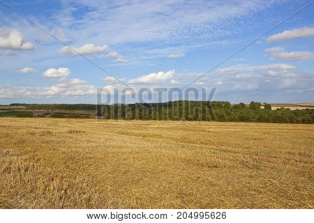 Woodland And Harvested Wheat