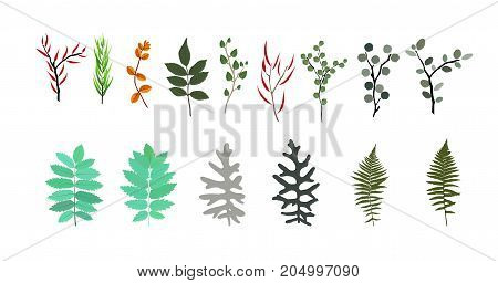 Tropical elements: Agonis, Eucalyptus, Annona, Balata, Zamiokulkas, Cissus. Colorful naturalistic pictures. Vector Illustration. EPS10