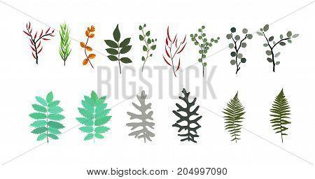 Tropical elements: Agonis, Eucalyptus, Annona, Balata, Zamiokulkas, Cissus. Colorful naturalistic pictures. Vector Illustration. EPS10