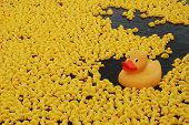 The large yellow plastic duck leads the way in the Great British Duck Race on the River Thames. poster