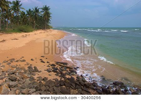 Perfect Tropical Sandy Beach With Palm Trees