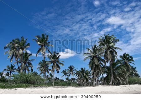 Beautiful Tropical Sandy Beach With Palm Trees