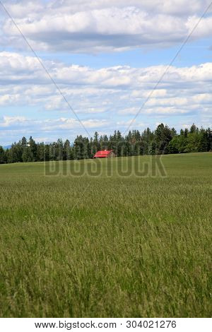 Red Barn in a wheat field. Old Red Barn or Farm House in a Wheat or Alfalfa Field. Iconic image of the American Farming community. Room for text over lay.