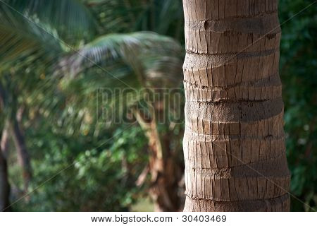 Textured Palm Tree Trunk In Tropical Forest