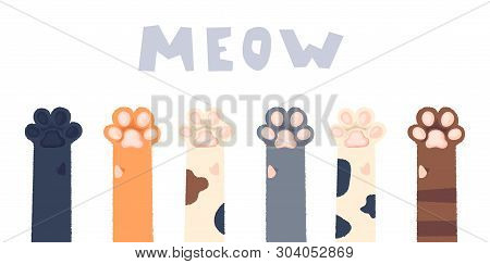 Cat Paws Wallpaper, Legs, Dog Paw, Cat Background, Kitten Flat Design, Prints, Cartoon, Cute Cat Foo