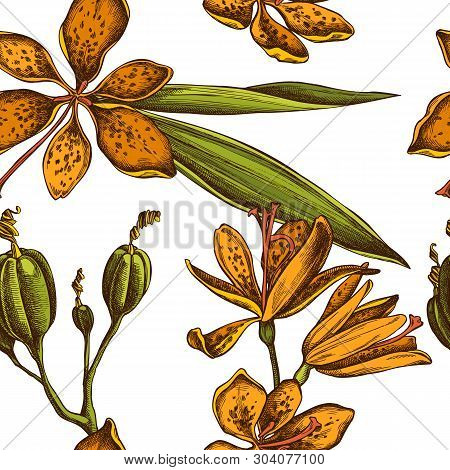 Seamless Pattern With Hand Drawn Colored Blackberry Lily
