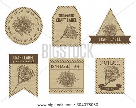 Craft Labels With Eucalyptus Flower Hand Drawn Illustration